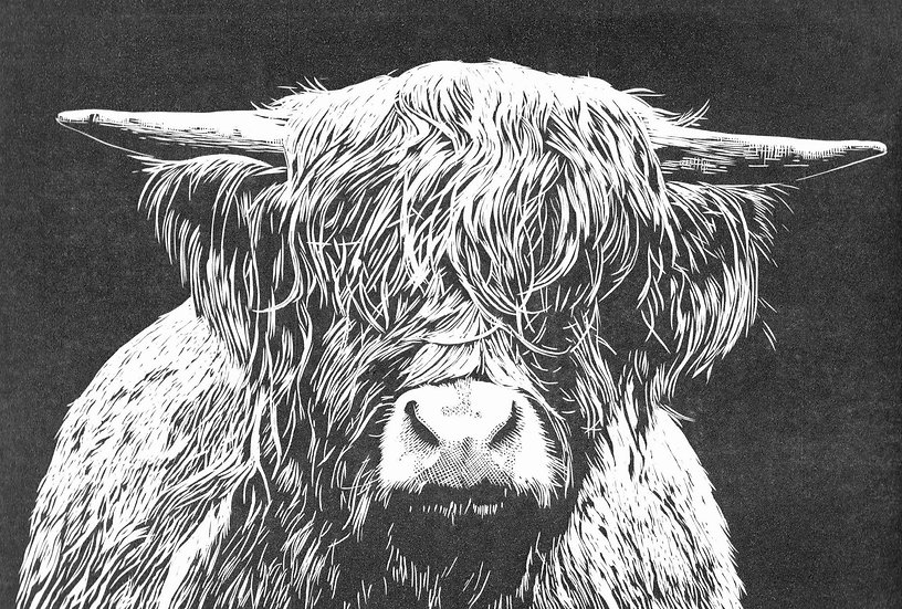 'Highland Cow' Carine Eunson