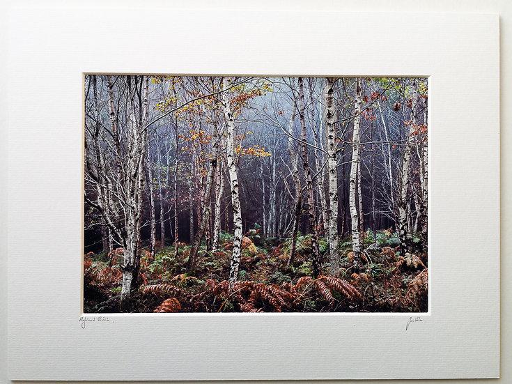'Highland Birch' Jan Holm