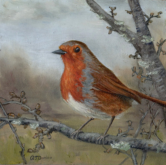 'Robin on Apple Tree' Quintin Davies