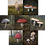 Thumbnail: Fungi Card Pack (x7) Quintin Davies