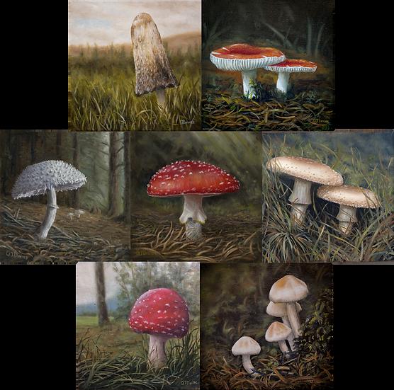 Fungi Card Pack (x7) Quintin Davies