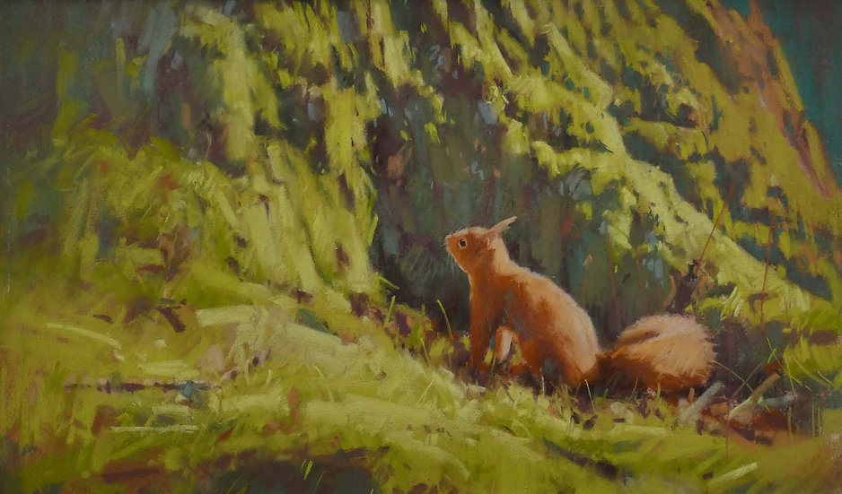 'Red Squirrel, Crathes' John Threlfall