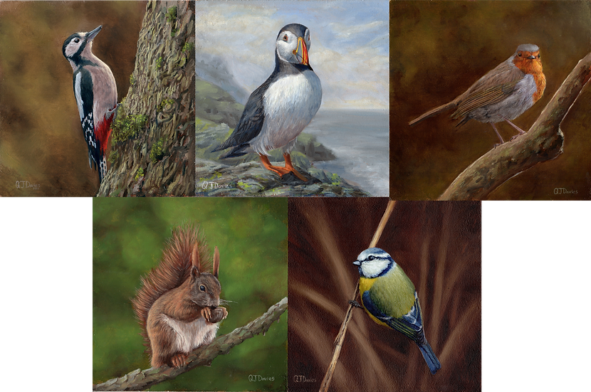 Fauna Card Pack (x5) Quintin Davies