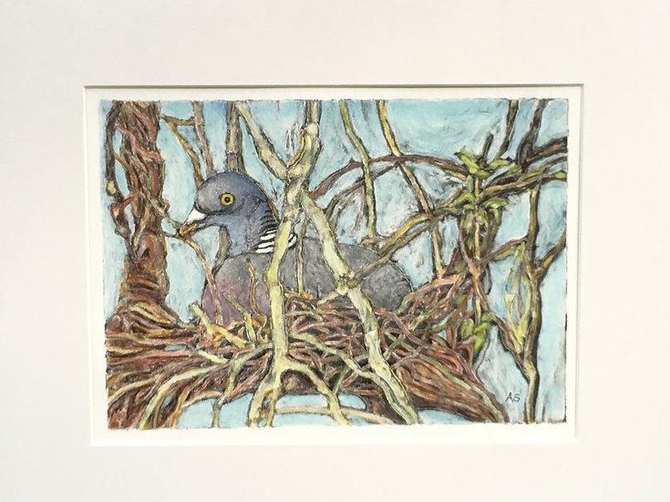 'Nesting Wood Pigeon' Anna Sedgwick