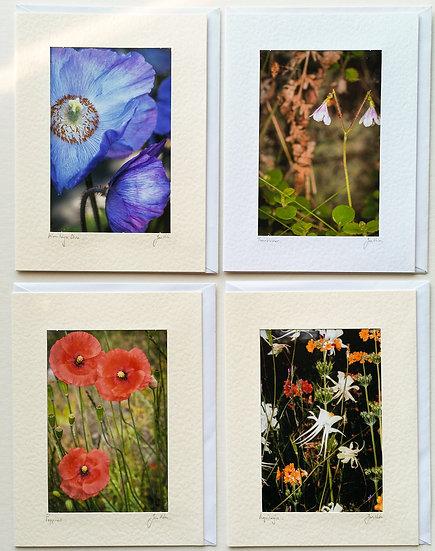 'Flower Cards Pack of 4' Jan Holm