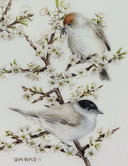 """""""Blackcaps in the Blackthorn"""" Jenny Musker"""