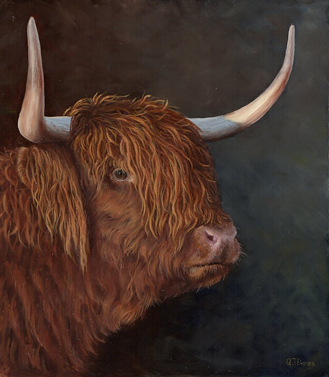 'Highland Coo' Quintin Davies