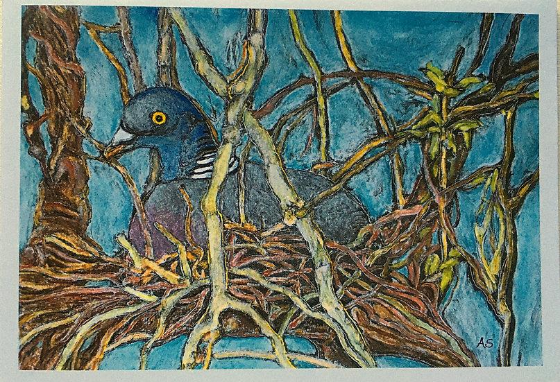 'Nesting Woodpigeon Cards 5 Pack' Anna Sedgwick