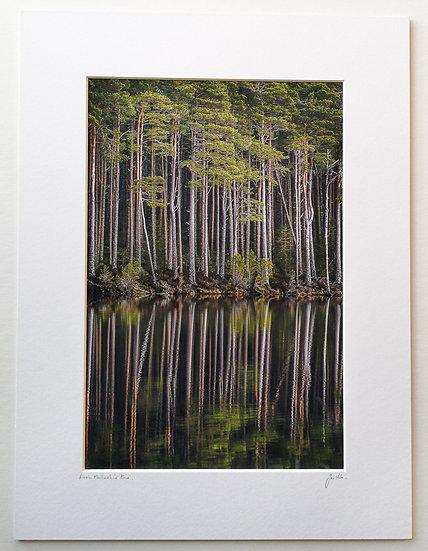 'Loch Mallachie Pine' Jan Holm