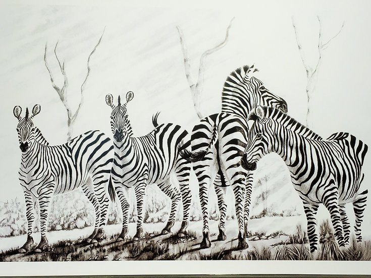 'A Dazzle of Zebras' Lily Taylor