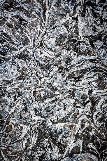 'Staffin Fossils' Jan Holm