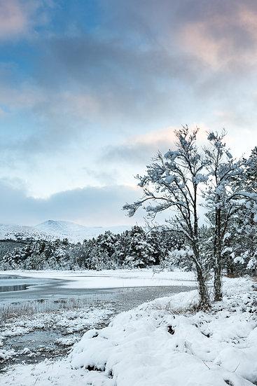 'Loch Morlich, Winter' Jan Holm