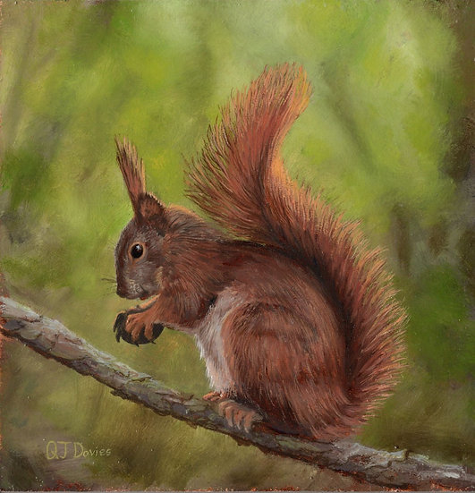 'Red Squirrel' Quintin Davies