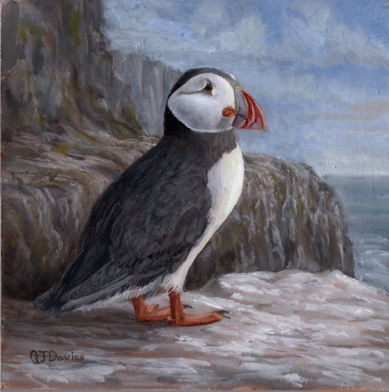 'Cliff Top Puffin' Quintin Davies