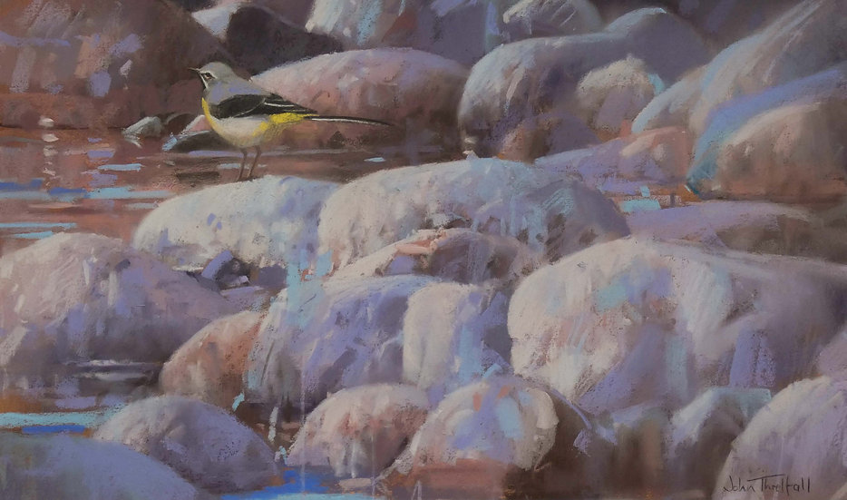 'Grey Wagtail, River Dee, Aboyne' John Threlfall
