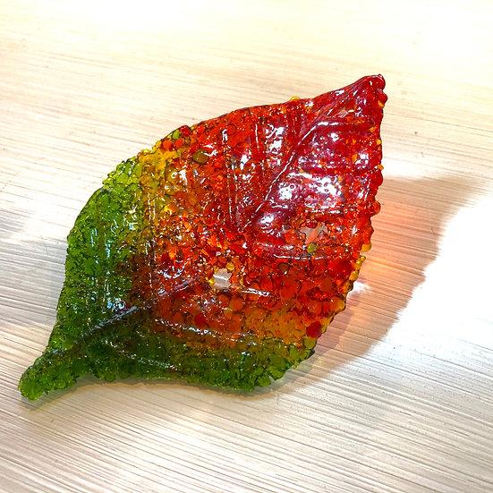 Beech Leaf -Ashley Brammer