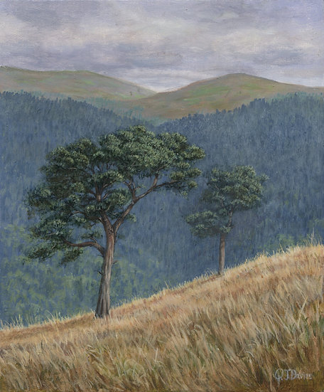 'Cairn Leuchan Pines' Quintin Davies