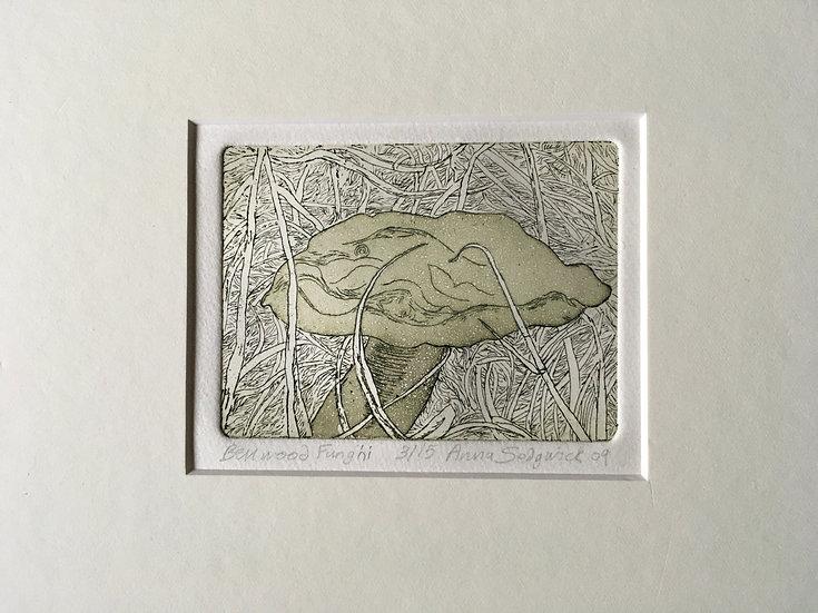 'Fungi (Boletus)' Anna Sedgwick