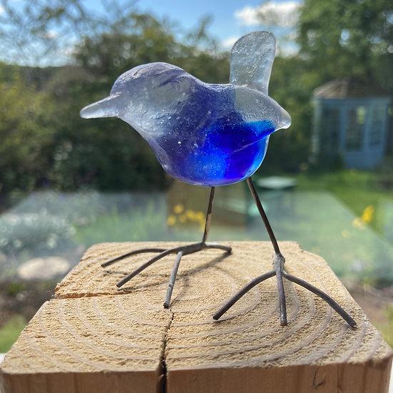 'Little Royal Blue Wren' Ashley Brammer