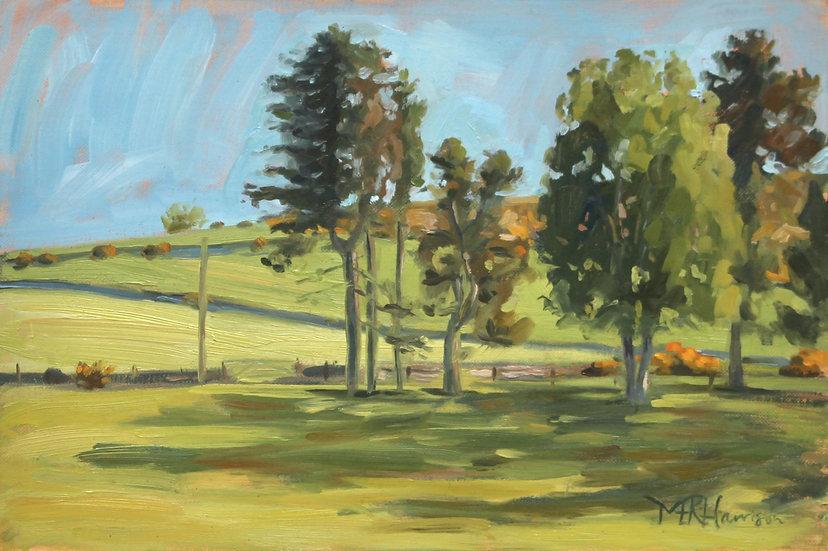 """Green and Gold Morning Light"" Melanie Harrison"