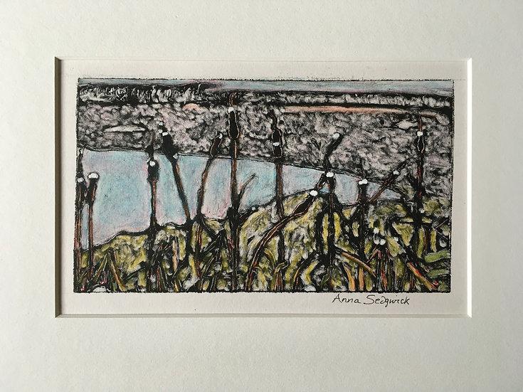 'Bulrushes Loch Kinord' Anna Sedgwick