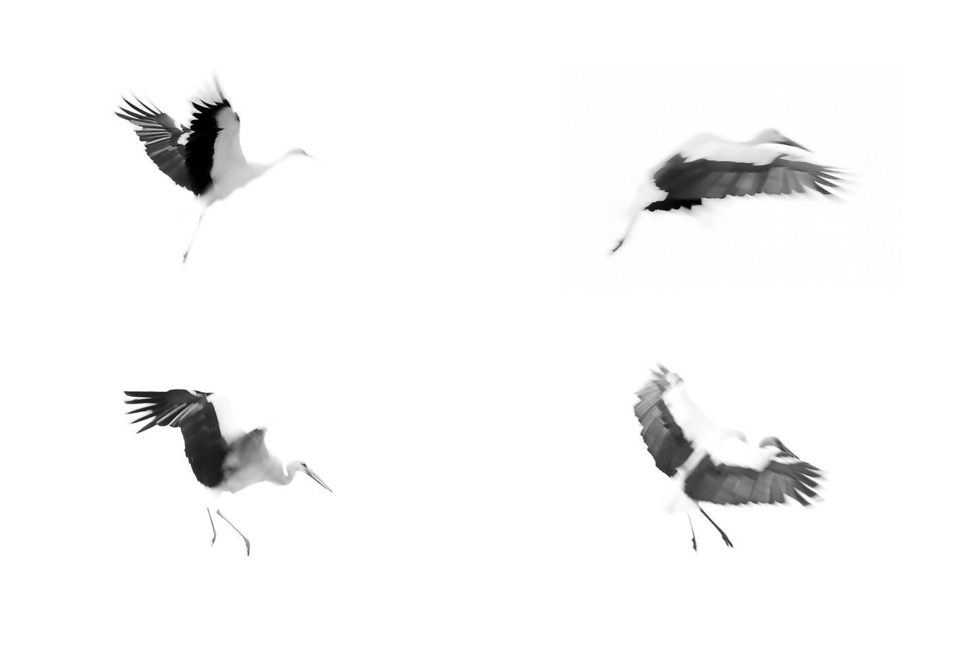 Cigognes Tryptique Fine Art - Soft Focus