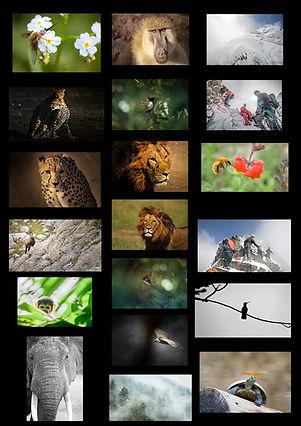 Echantillon photos.jpg