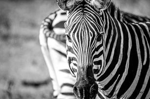 31 janvier 2019africa22.jpg