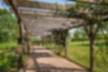 Garden rose archway