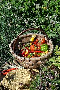 Herb garden 2019.jpg