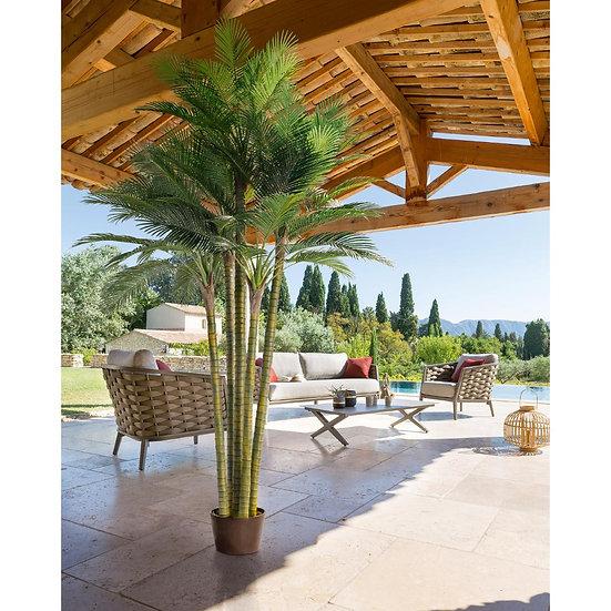 Palma 5 tronchi