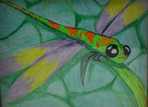 Hi, We're The Lofty Dragonfly!