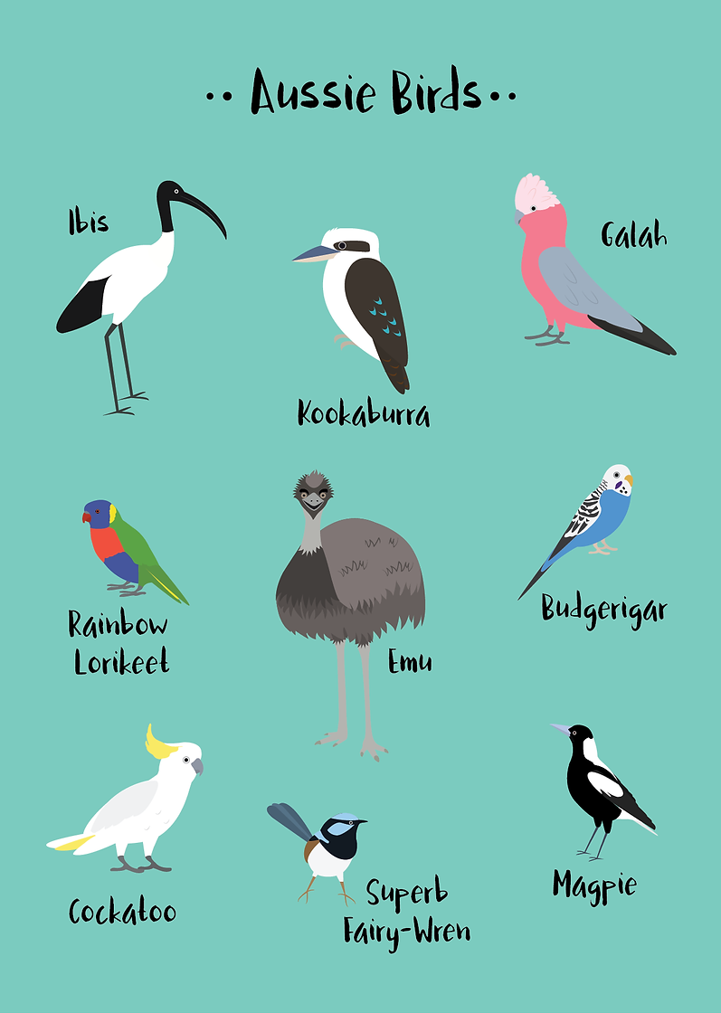 Australian Bird Illustrations