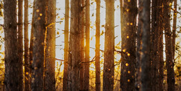 Nature's Heartbeat