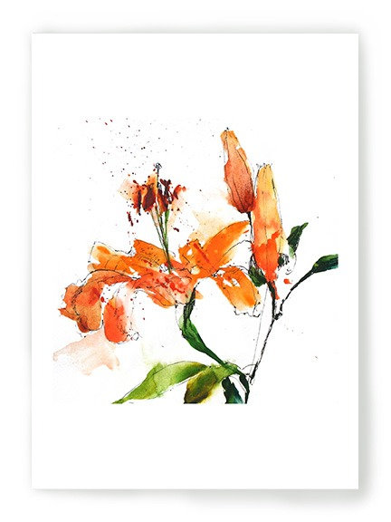 Lucy's Lily- Tigers C019