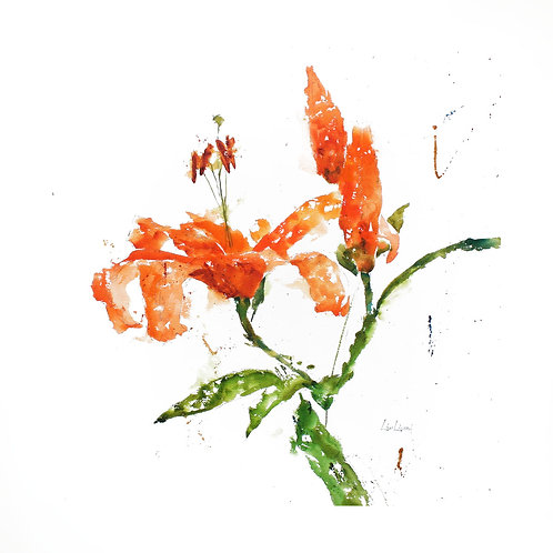 Lucy's Lily - Tigers