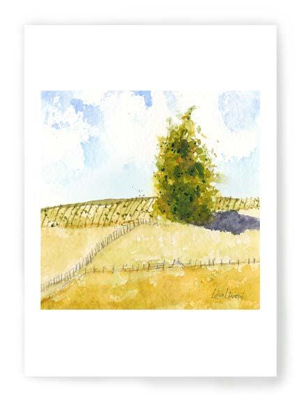 Vineyard Hill C028