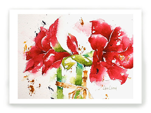 Valentine Amaryllis C005