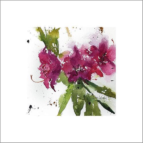 Raspberry Rhododendron