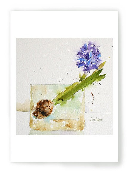 Hyacinth Bulb Blooming Blue C009