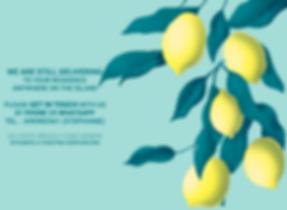 Feuillage Citronnier livraison.png