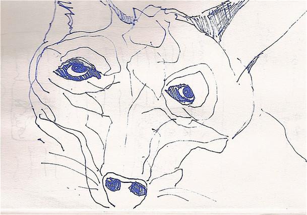coyote blue 300.jpg