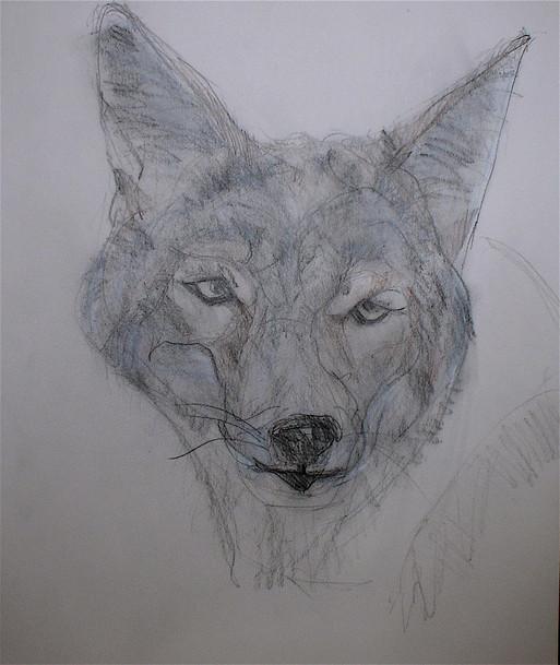 26. Coyote.JPG