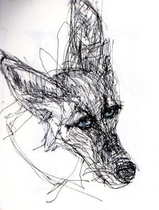 Coyote%20ink%20drawing_edited.jpg