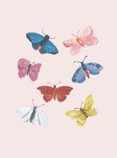 Fluttery-Butterflies.jpg