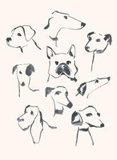 Dog-study.jpg