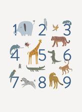 Safari-Numbers.jpg