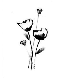 688_BW-Wildflowers.jpg