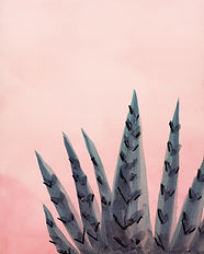 855_Succulent-in-pink-light.jpg