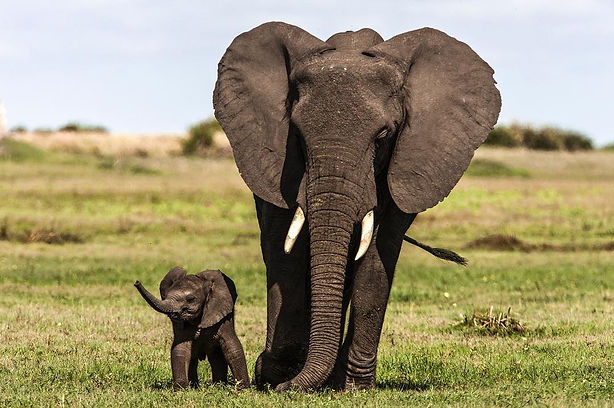 elephant and baby.jpg